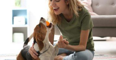 idées jeux stimulation chien