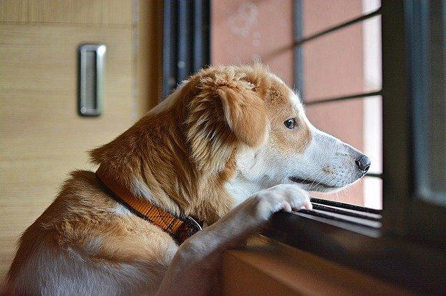 chien qui attend tristement son maître