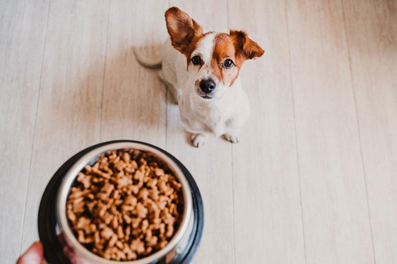 croquettes flatulences chien