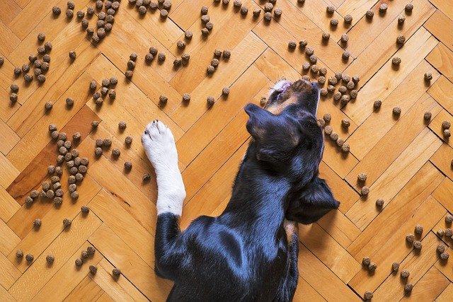 Conserver les aliments du chien