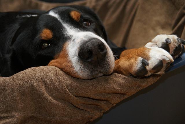 immobiliser le chien