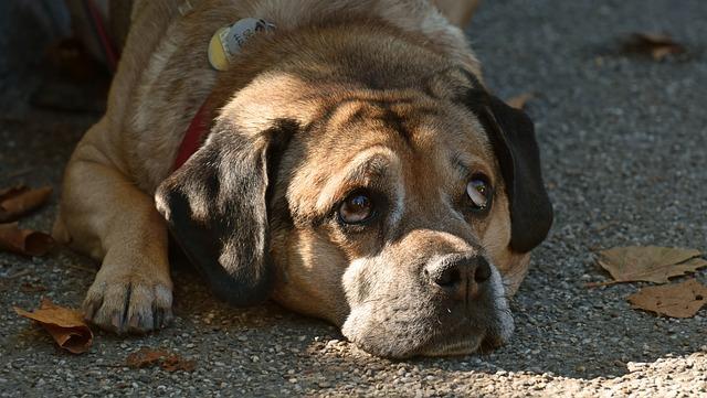 chien qui se cache et s'isole