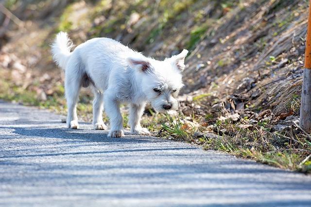 chien punitions