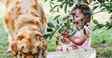 aliments toxiques pour chien
