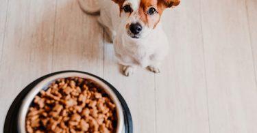 Quel régime alimentaire choisir pour son chien ?