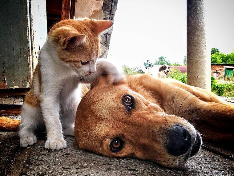 soin assurance santé animal compagnie