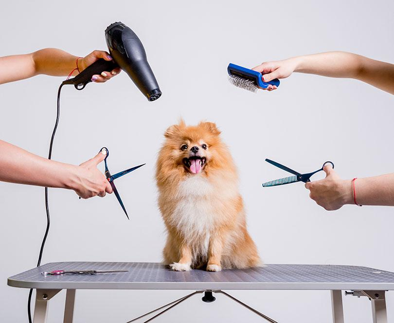 prendre soin poils chien